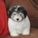Pup van Cloudy