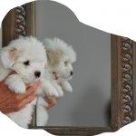 Puppy van Betty Boop