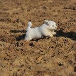 mijn vacht is veel te wit ....heerlijk door het zand rennen !!!